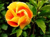 Pokojowa zieleń i pełny nadziei kwiat, Obraz Stock