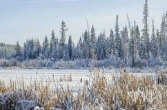 Pokojowa zimy scena Zdjęcia Royalty Free