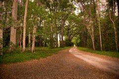 pokojowi ścieżek drewna Obraz Royalty Free