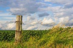 Pokojowy środkowo-zachodni pole w lecie zdjęcie royalty free