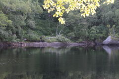 Pokojowy jezioro Obraz Stock