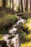 Pokojowy las z dzikim spływanie strumieniem zdjęcie royalty free