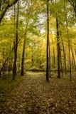 Pokojowy, liść posypująca ścieżka w lesie lokalizować w północnych drewnach zdjęcie royalty free