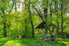 Pokojowy moment W Pogodnym lesie obrazy stock