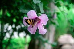 Pokojowy motyl obrazy stock