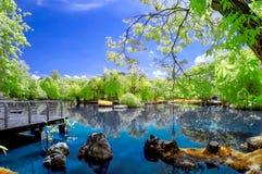 Pokojowy natura Zdjęcie Stock