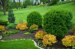 Pokojowy ogród z Świeżo Koszącym gazonem zdjęcia royalty free