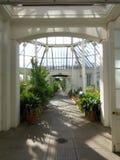 POKOJOWY, POGODNY SALOWY ogród, fotografia royalty free