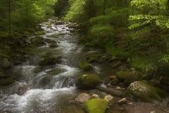 Pokojowy ranek rzeką w Dymiących górach zdjęcia stock