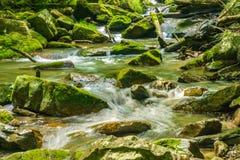Pokojowy Skalistej góry Pstrągowy strumień obraz stock
