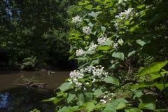 Pokojowy strumień w lesie z drzewem w kwiacie obraz royalty free