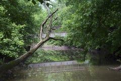 Pokojowy strumień w lesie z wycieczkować most obrazy stock