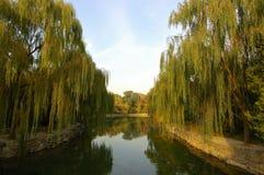 Pokojowy w ogródzie zdjęcie royalty free