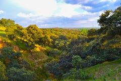 Pokojowy wieczór w zielonym polu z drzewami obraz royalty free