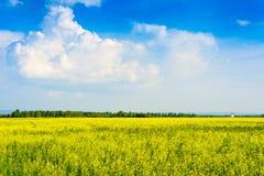 Pokojowy wiejski krajobraz w szerokim polu Obraz Royalty Free