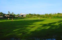 Pokojowy zieleni pole Zdjęcia Stock