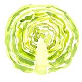 Pokrojona zielona kapusta ilustracji