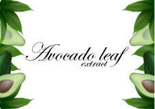 Pokrojony avocado tło z liśćmi Avocados siają z liściem Avocado połówki Odgórny widok z przestrzenią dla teksta royalty ilustracja