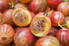Pokrojony jagodowy czerwony agrestowy zakończenie, selekcyjna ostrość Fotografia Royalty Free