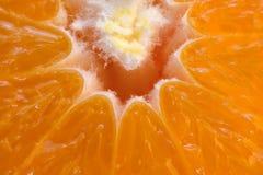 Pokrojony mandarynka cytrusa tło fotografia royalty free