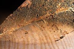 Pokruszony Książkowy liść na drewnianej desce Fotografia Stock