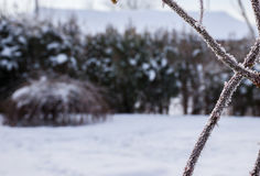 Pokrywać pęcherzami zimno Fotografia Stock