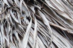 pokrywać strzechą dachowa tekstura Fotografia Royalty Free