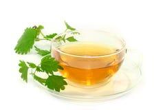 pokrzywowa herbata Obrazy Royalty Free