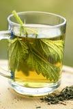 Pokrzywowa herbata Obraz Royalty Free
