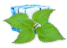 Pokrzywowy liść z lodem Fotografia Royalty Free