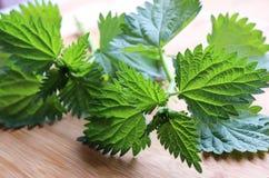 Pokrzywy lub urtica liście na drewnianym tle lecznicza roślina Pojęcie zdrowy odżywianie zdjęcie royalty free