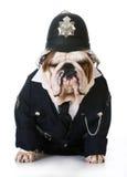Polícia ou coletor do cão fotografia de stock royalty free