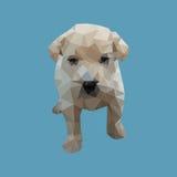 Polígono bajo del perro Fotos de archivo
