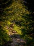 Polônia de Giewont Zakopane Foto de Stock Royalty Free
