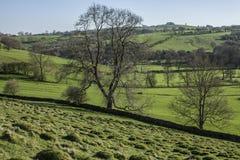 Pola, łąki i drzewa, Szczytowy okręg, Anglia obrazy stock
