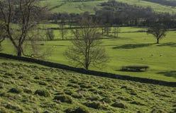 Pola, łąki i drzewa, widok Szczytowy okręg UK fotografia stock