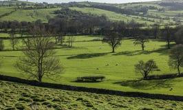 Pola, łąki i ogrodzenia, widok Szczytowy okręg UK obraz stock