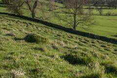 Pola, łąki i ogrodzenia, zielony widok Szczytowy okręg UK obrazy royalty free