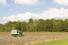 pola bawełny Fotografia Stock