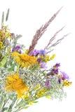 pola bukiet kwiatów Obrazy Stock
