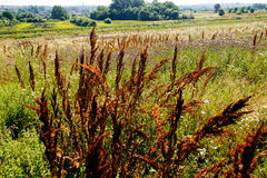 pola 01 08 2011 duży grupy zrobił holandiom target1357_0_ małego rośliny zelhem Fotografia Royalty Free