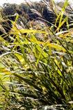 pola 01 08 2011 duży grupy zrobił holandiom target1357_0_ małego rośliny zelhem Zdjęcia Royalty Free