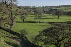 Pola i łąki, Szczytowy okręg, Anglia obraz royalty free