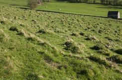 Pola i zieleni łąki, Szczytowy okręg, Anglia UK zdjęcie stock