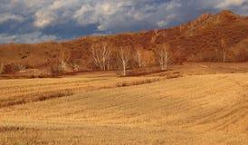 Pola Mongolia obszaru trawiastego Wewnętrzna sceneria Obrazy Royalty Free