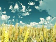 pola pszenicy Obrazy Stock