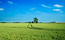 pola pszenicy krajobrazowa Obrazy Royalty Free