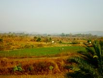pola rolnicze Obraz Royalty Free