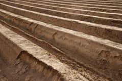 pola szparagów Zdjęcie Stock