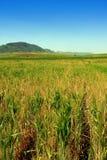 pola uprawne kształtują teren Sicily Obrazy Stock
